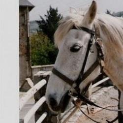 Gueri par l amour d un cheval